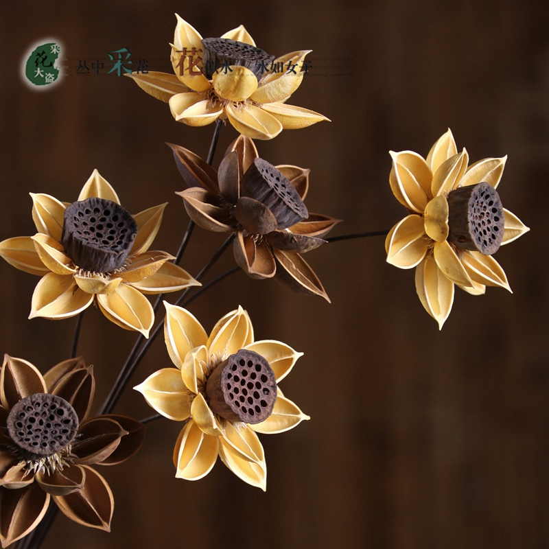 2pcs Pure Plant Handmade Dried Lotus Flower Does Not Fade Art Flower