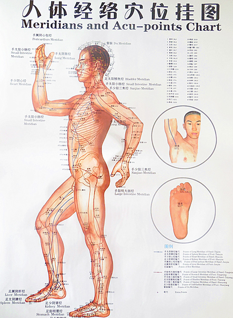 Free Shipping Color Body Acupuncture Points Chart Meridian Points