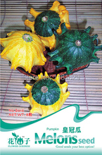 (Mix minimum order $5)1 original pack 8 pcs Doll Pumpkin Seeds vegetable seeds free shipping