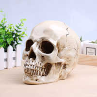Skull Milky White Sculpture Resin Crafts Halloween Decoration Medical Painting Movie Special Props Handmade High Quality