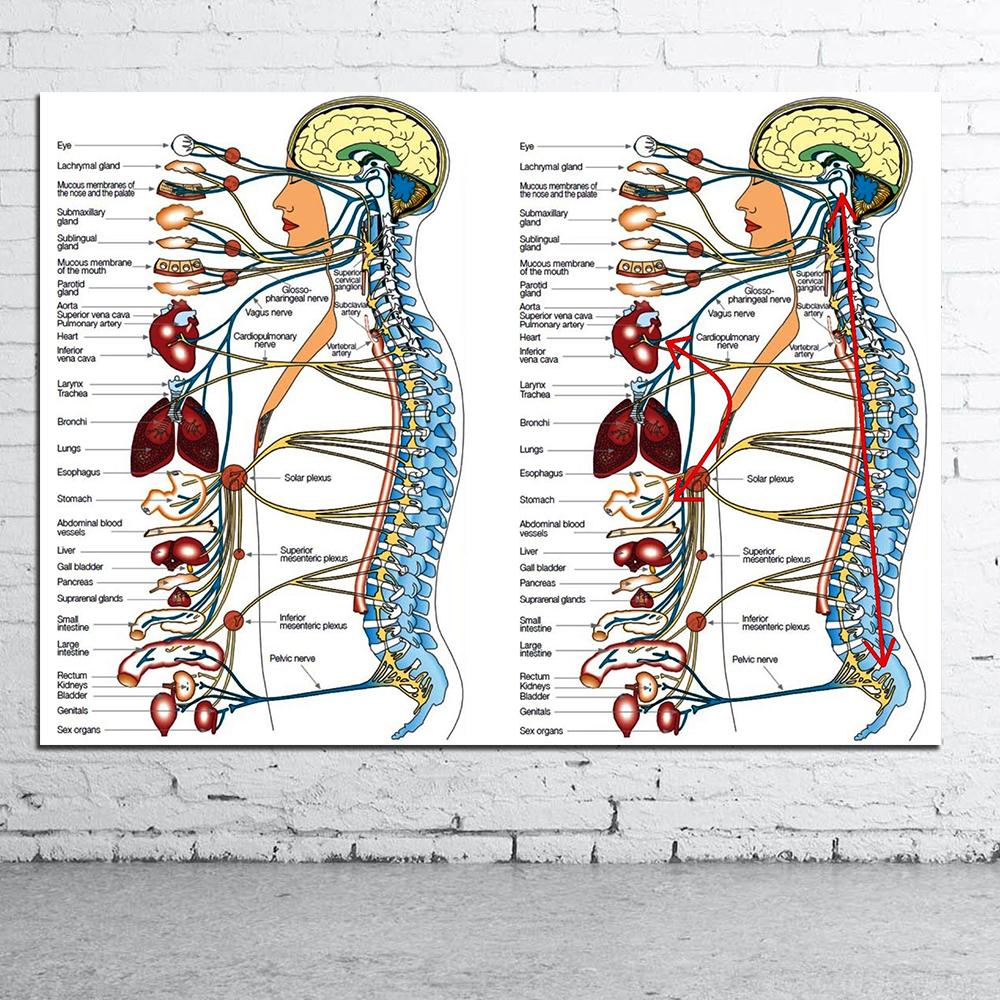Human Organs Medical Anatomical Chart Canvas Poster Geekoplanet