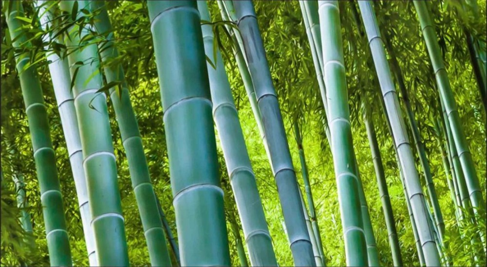 Us 1532 45 Offcustom Mural 3d Photo Wallpaper Living Room Bamboo Forest Trail Scenery Decor Painting 3d Wall Murals Wallpaper For Walls 3 D In