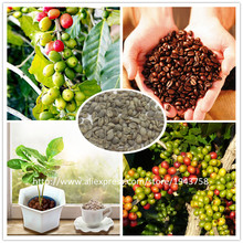 A Pack 20 Pcs Coffee Bean Seeds Balcony Bonsai Tree Plant Seed Coffee Cherry Seeds
