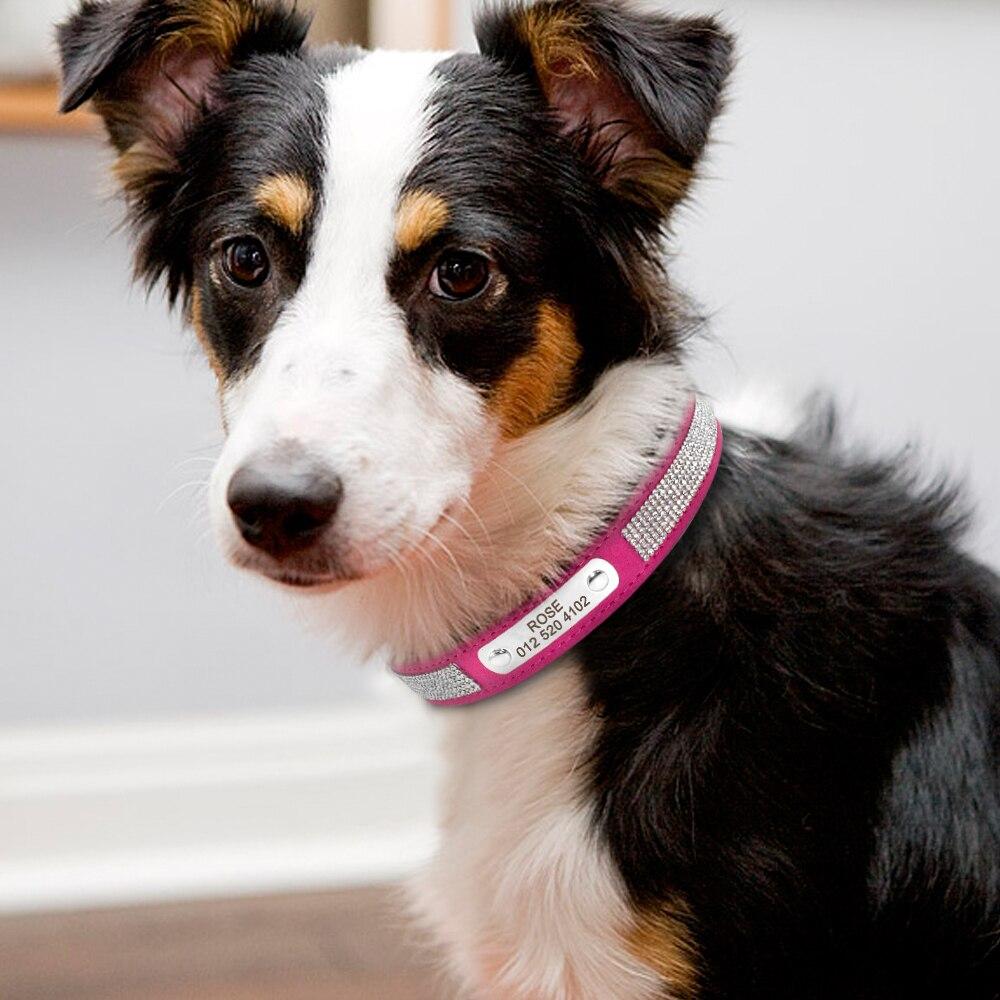 collier chien personnalisé strass ne rouille pas