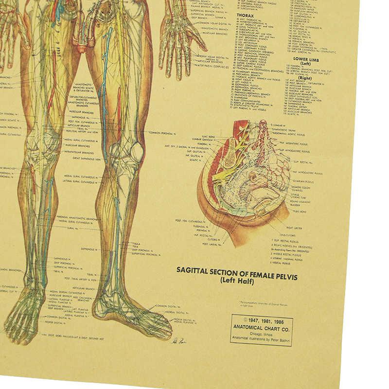 DLKKLB постер нервной системы Винтажный стиль ретро постер мускулы структура Настенная Наклейка Бар Кафе домашняя декоративная живопись