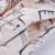 Niños Chalecos Unisex Caliente 2017 Nuevos Niños de La Manera Abrigos de Invierno Gato Imprimir Niños Niños Niñas Chaleco Con Capucha de la Chaqueta