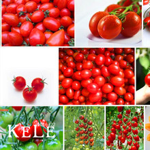 Best-Selling!Cherry tomato seeds,red tomato cherry tomatoes,Original Package vegetables fruit seed, 30 particles,#2Y6KZH