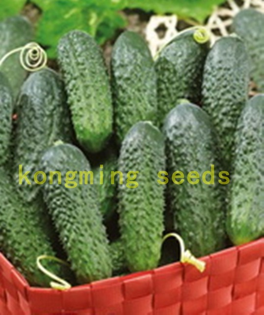 Mini Cucumber Vegetable And Fruit Seeds For Home Garden