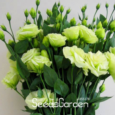 Hot Sale!White Eustoma Seeds Perennial Flowering Plants Balcony Potted Flowers Seeds Lisianthus,100 PCS,#F06RP8