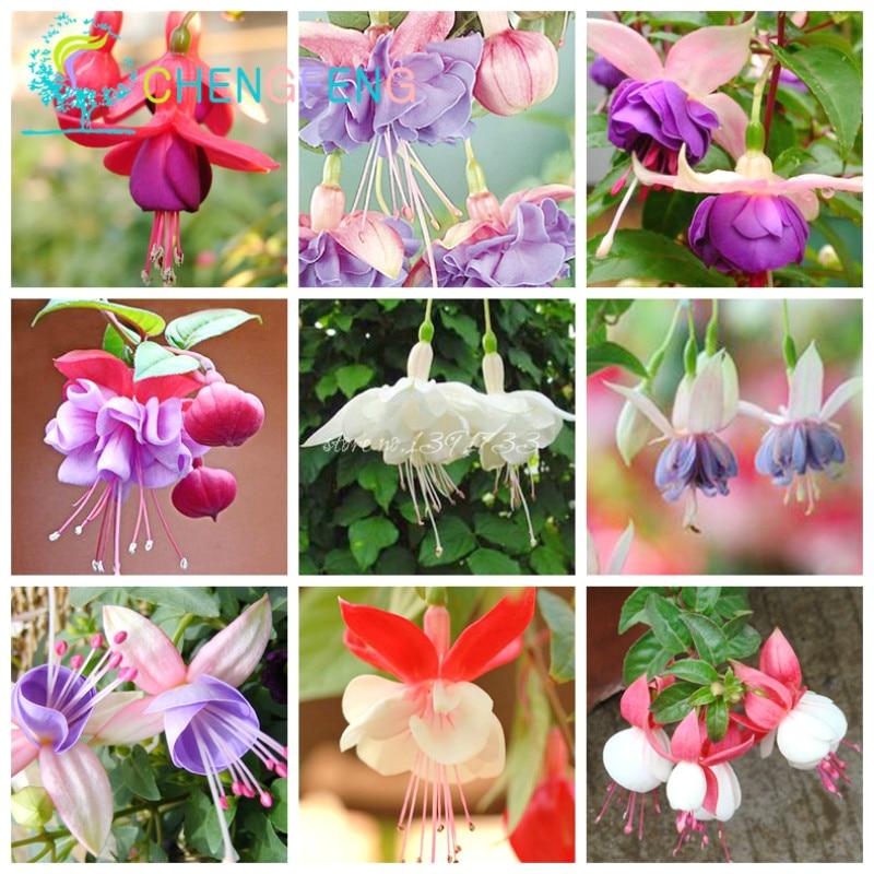 aliexpress  buy free shipping pcs fuchsia hybrida hort, Beautiful flower