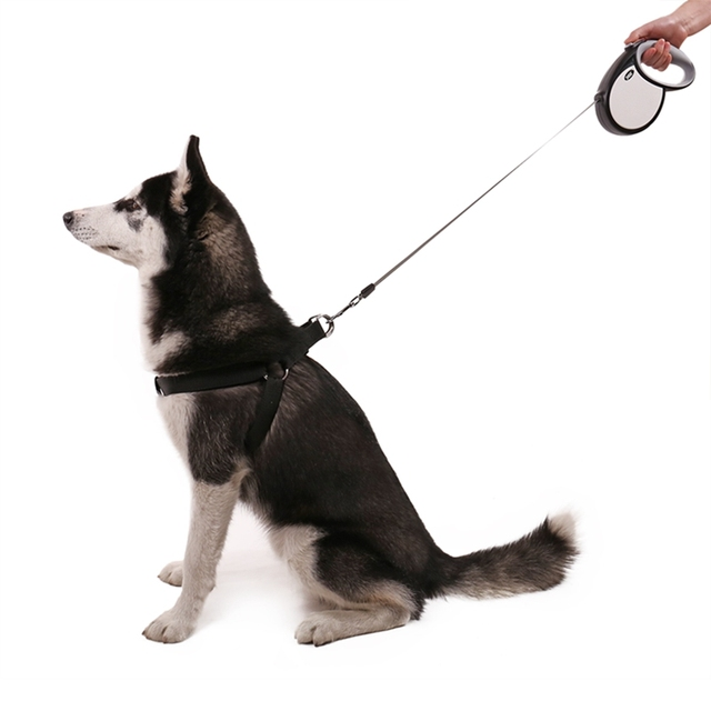 Automatic Dog Leash With Reflective Strip