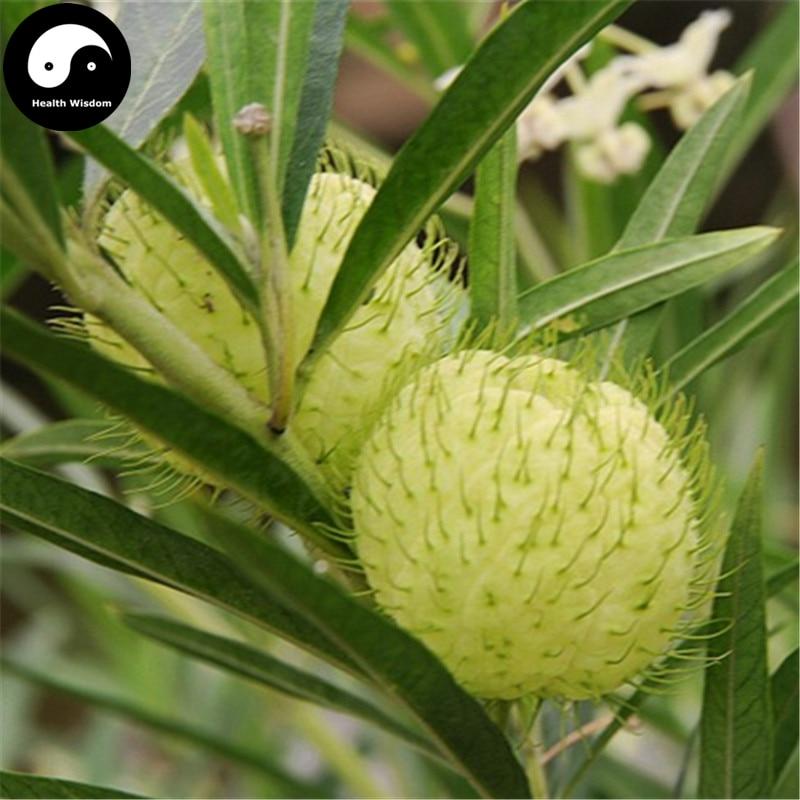 Купить Asclepias Кустарниковая дерево Semente 60 шт. завод Qi Цю го бонсай