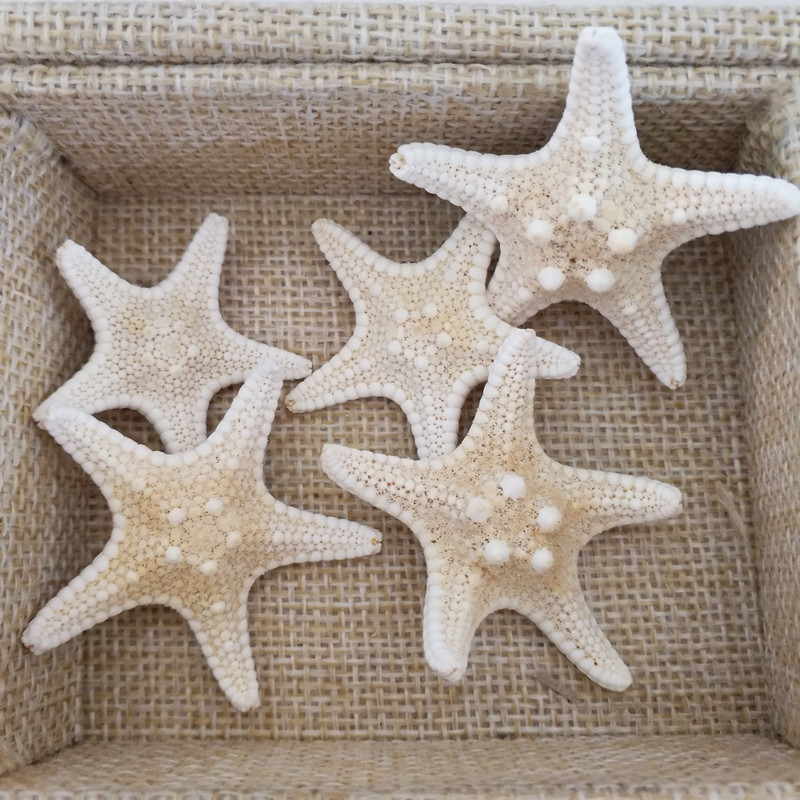 HappyKiss Natural Starfish BEIGE Color Scrapbooking Carft For Party Home Decoration Random Mixed 5pcs 2-4CM Sea Star Starfish