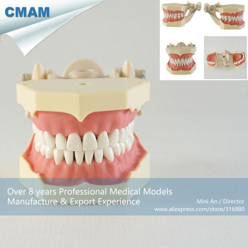 13008 CMAM-DH107 SF Тип Исследование модели, мягкая резинка 32 шт. Стандартный зубы зубной модели ...