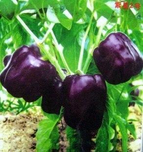 Цзин Цай Zixing Перец семена 100 Семена питание овощной