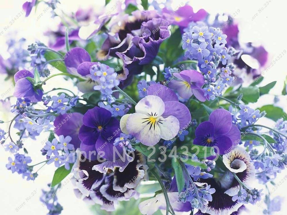 African Violet Seeds Garden Plants Free Shipping 30/bag Flowers Perennial Herb Matthiola Incana Seed Home Garden 2016 Hot Sale