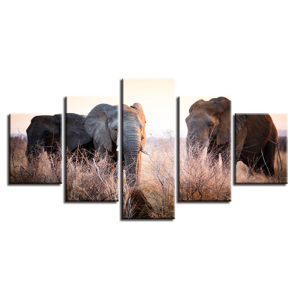 98 Koleksi Gambar Kerangka Hewan Gajah HD Terbaru