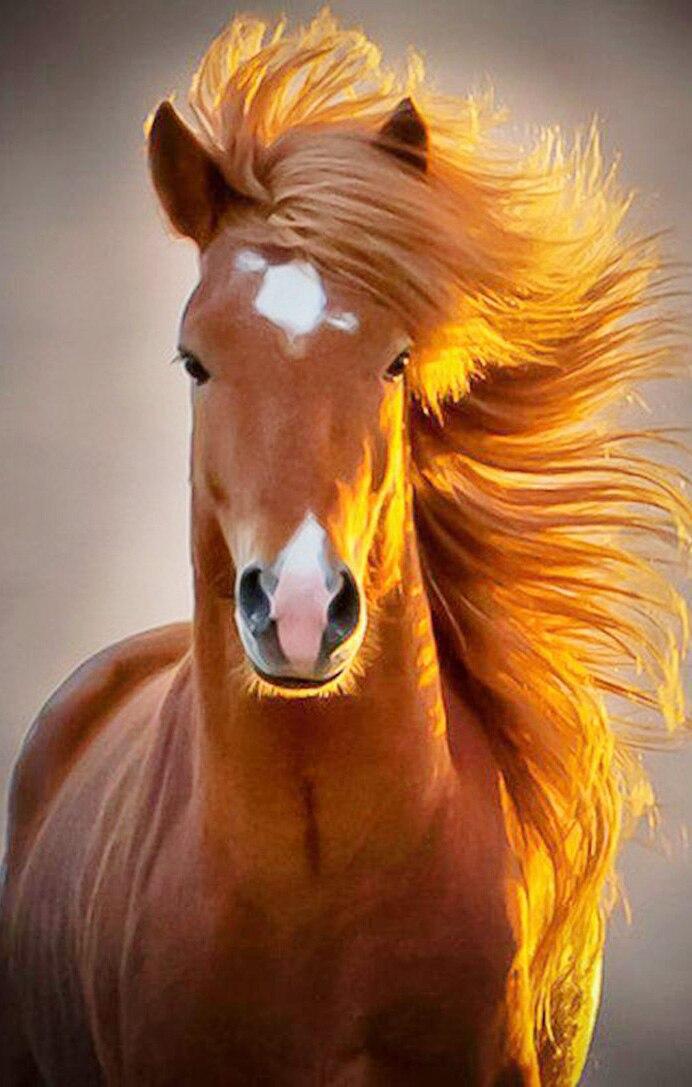 запросу картинки с лошадью на аву претендующего