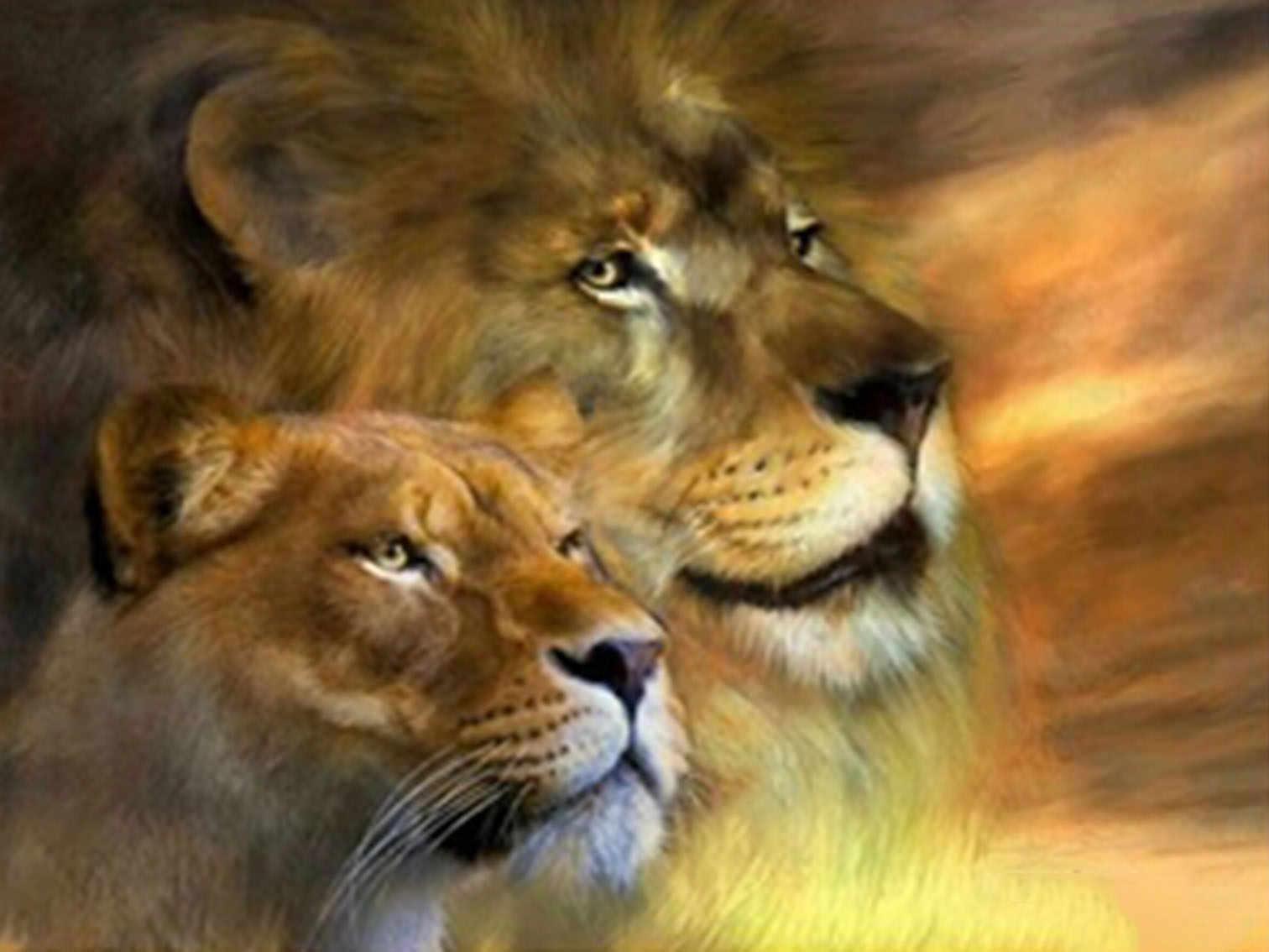 """30x40 см (12 &quotx 16"""") пара львы животных полный дрель положить Вышивка DIY с"""