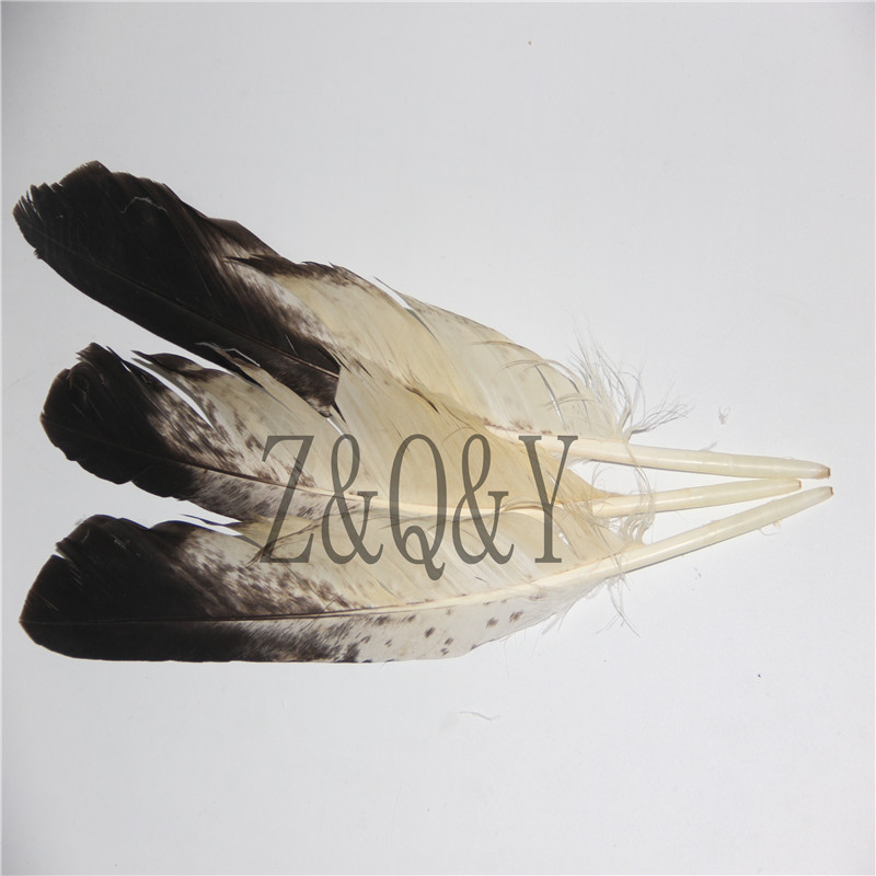 Z&Q&Y Natural Precious 2 30-40CM/12-16 Inch Eagle Wings Feather DIY Decoration Collection FeatherZ&Q&Y Natural Precious 2 30-40CM/12-16 Inch Eagle Wings Feather DIY Decoration Collection Feather