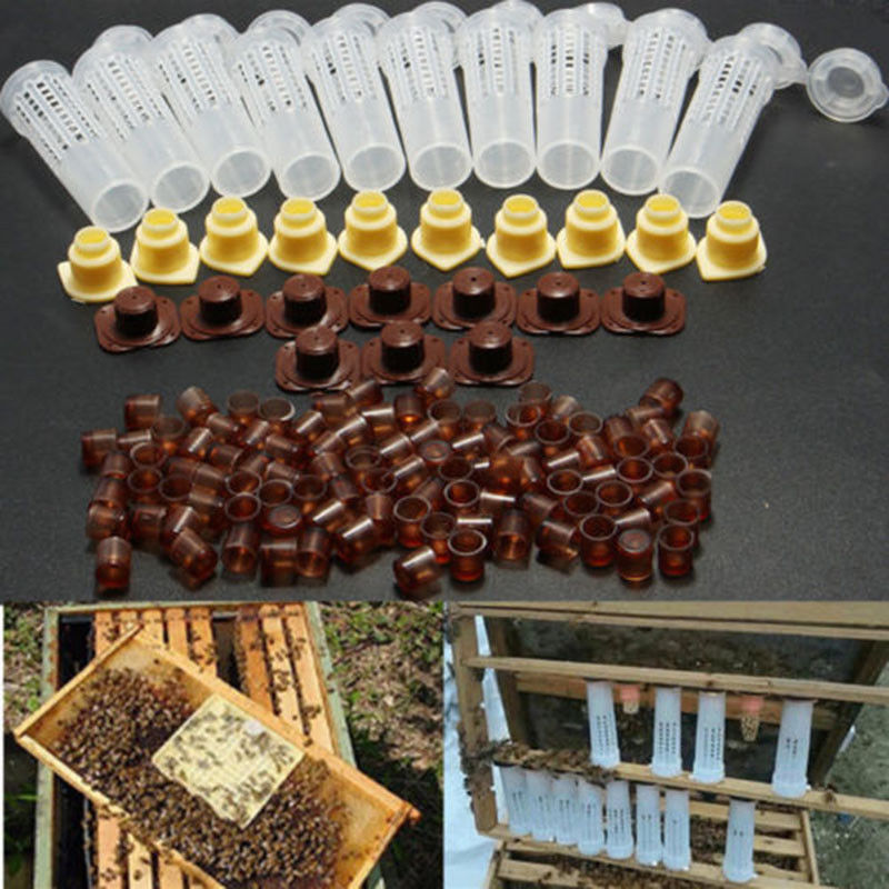 100pcs Bees Tools Cages Queen Rearing Cupkit Plastic Bee Cell Cups Cultivating Box Cell Cups Bee Cage Beekeeping Tool Kit