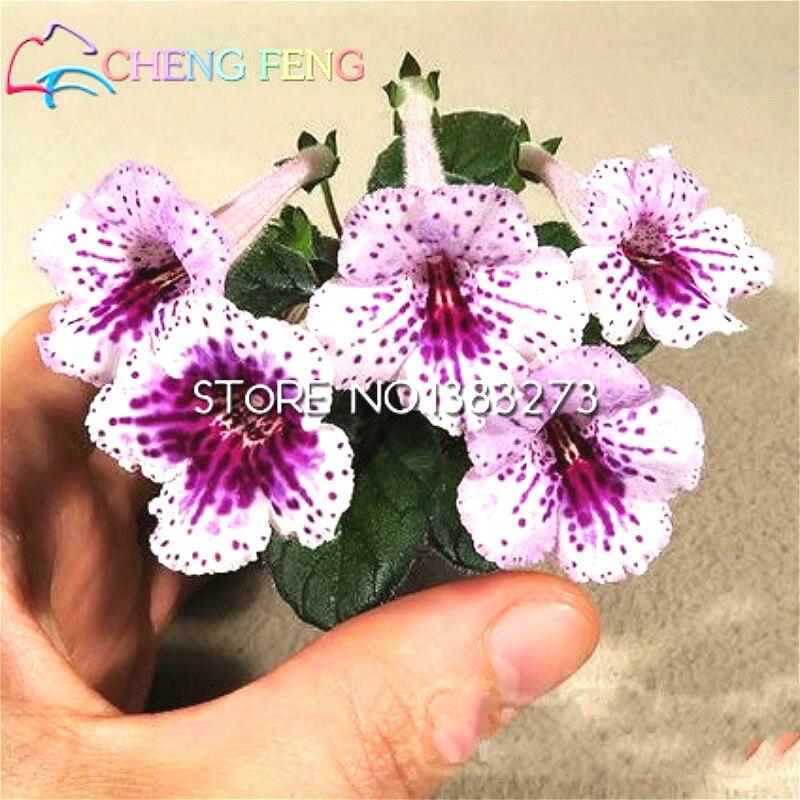 Hot Sale 100pcs Rare Gloxinia Seeds Perennial Flowering Plants Sinningia Speciosa Bonsai Balcony Flower For Diy Home Garden