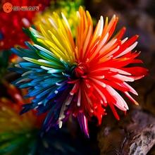 Rainbow Chrysanthemum Flower Seeds Rare Color New Arrival DIY Home Garden Flower Plant  50 Particles / lot