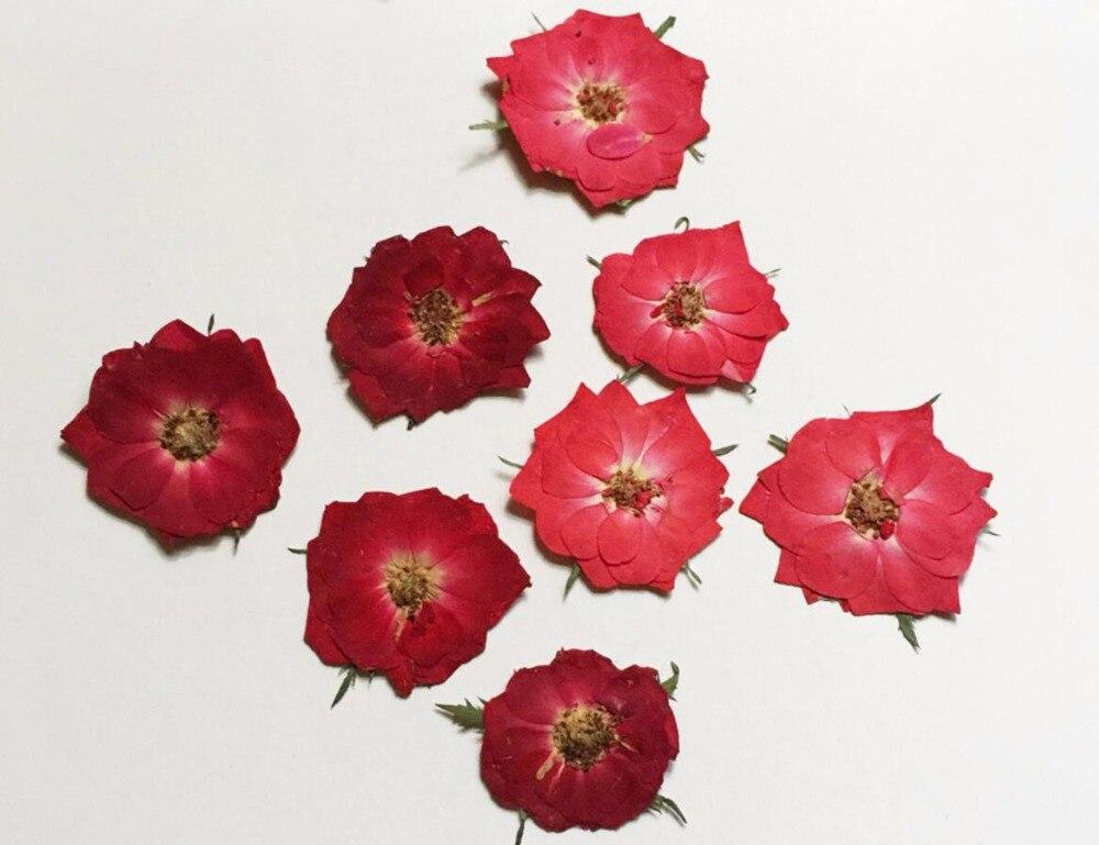 100 Pcs Pressees Sechees Rouge Rose Rose Fleur Pour Maison De Noce
