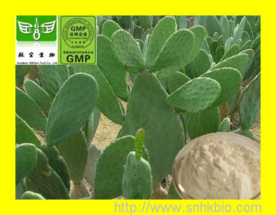 1000gWholesale Retail Hoodia Cactus Extract(4:1,10:1, 20:1 for weight loss)/Healthy care