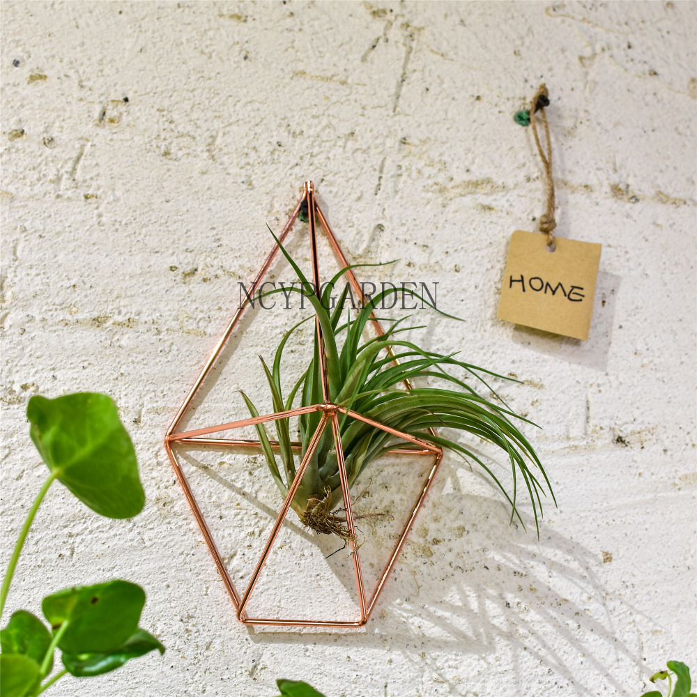 Air Plant Wall Holder Us 9 99 Rustic Wall Mount Hanging Geometric Metal Tillandsia Air Plants Holder Iron Rack Black Wall Accent Decor Home Modern In Flower Pots