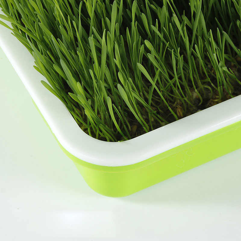Seed Sprouter Tray Soil-Free Big Capacity Germination Grow Box Grass best W3L5