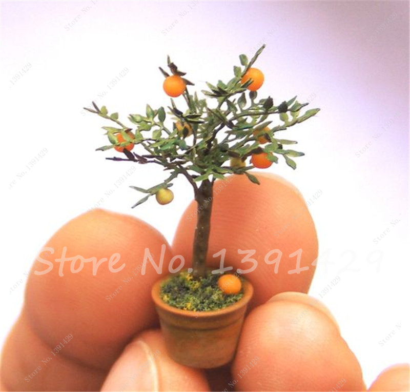 20 Pcs Edible Fruit Mini Bonsai Orange Tree Seeds, Indoor