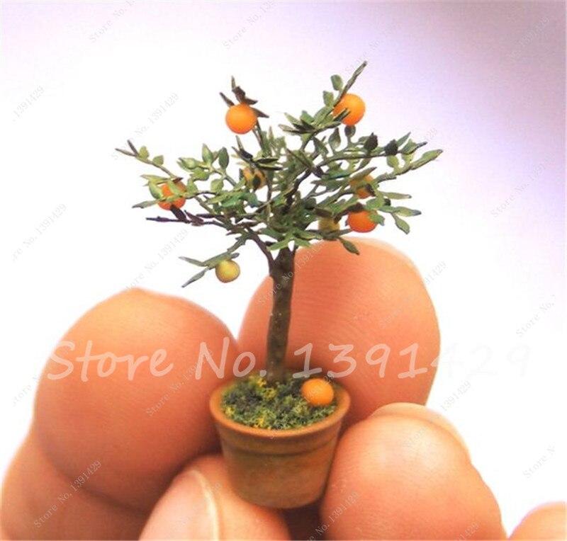 20 pcs Edible Fruit Mini Bonsai Orange Tree Seeds, Indoor Dwarf Bonsai Plant Citrus seed Bonsai Mandarin Orange Seeds