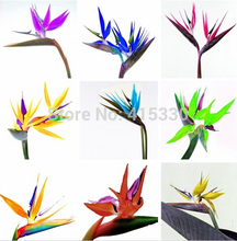 Flower pots planters All sorts of color Strelitzia reginae seeds hybrid bird paradise seed Bonsai plants Seeds for home & garden