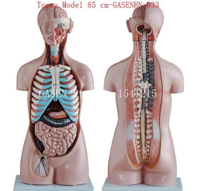Aliexpress.com : Viszeralen anatomie männlich weibliche Anatomischen ...