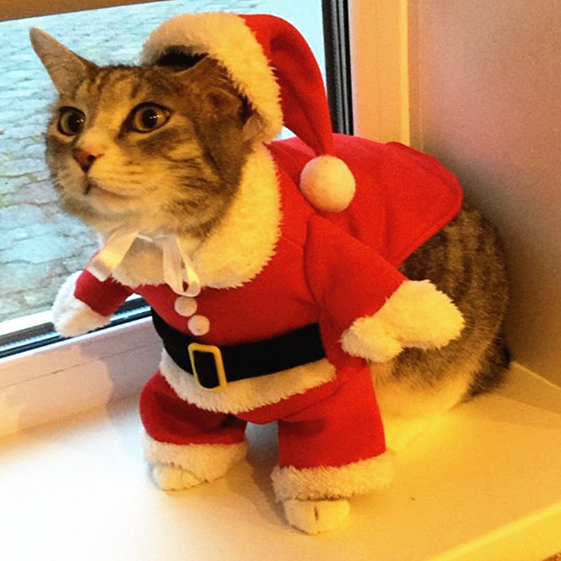 Christmas Cat Clothes For Cat Costume Clothes For Small Cats Pet Puppy Clothes Hoodies Winter Clothes For Chihuahua Teddy 30F1-in Cat Clothing from Home ... & Christmas Cat Clothes For Cat Costume Clothes For Small Cats Pet ...