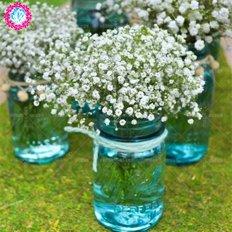 100 pcs/bag Baby`s breath Seeds Bonsai Flower Seeds Fragrant ...