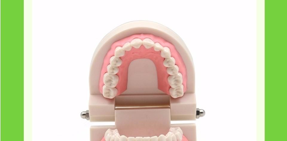 Teeth Model0000007