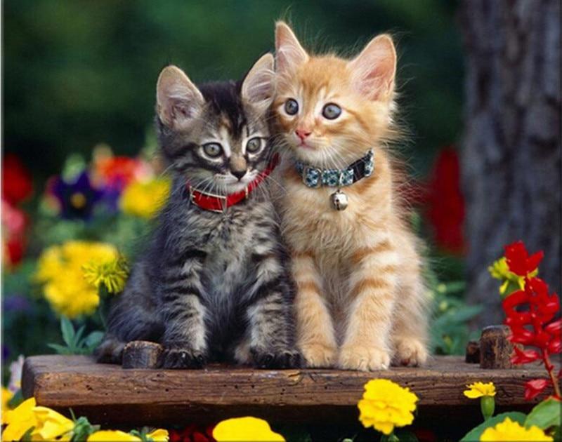 Скачать Обои Бесплатно Кошки