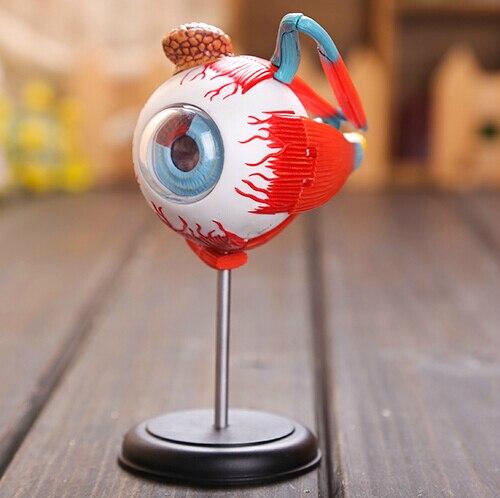 Nuevo MASTER 4D ojo humano estructura modelo anatómico ciencia ...