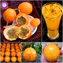 10pcs/bag Orange Yellow Colombia Passion Fruit ,Granada, Passiflora Ligularis,Perennial Sweet Granadilla For Garden(China)