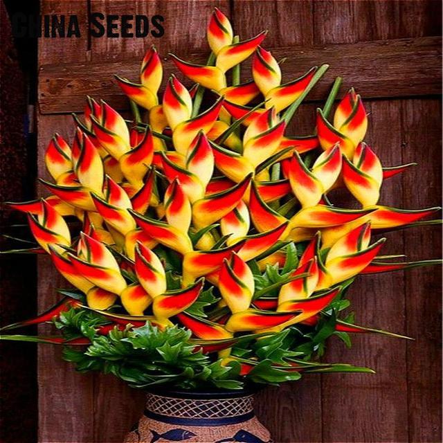 Комнатное Горшечное растение цветок оранжевый стрелитция королевская бонсай птица рая плантас жардим бонсай садовое украшение 100 частиц/лот