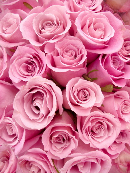 Natural pink rose photo backdrop fleece photography backdrops for portrait studio photography background F-1084-A 8x10ft valentine s day photography pink love heart shape adult portrait backdrop d 7324