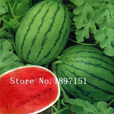 GGG Big sale Watermelon Seeds - 30pcs seeds fruit seeds for summer bonsai fruit for home garden