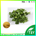 100% organic Nature Parsley Extract Powder/apigenin 300g/lot