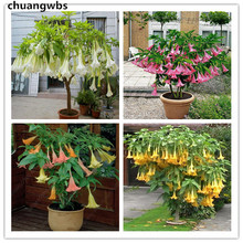 100 pcs/bag brugmansia datura dwarf Angel Trumpets bonsai flower rare potted plant for home garden
