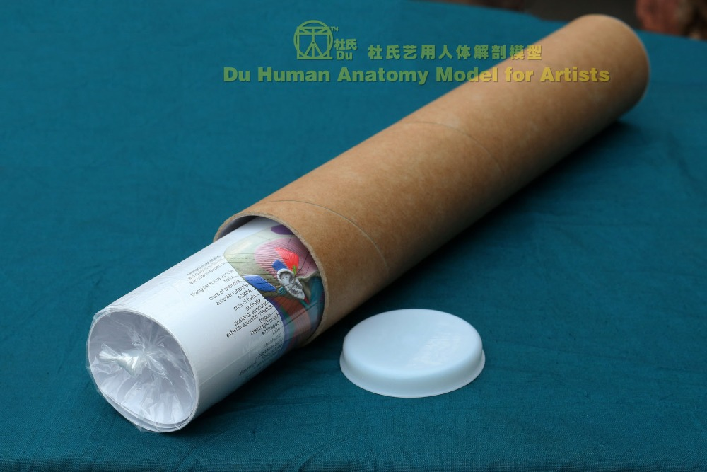 Riesigen Menschlichen Anatomische Diagramm 64 \