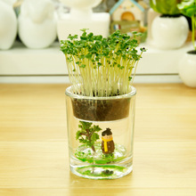Hot Creative Desktop automatic water potted plants green fairy cup low-carbon green potted miniature bonsai