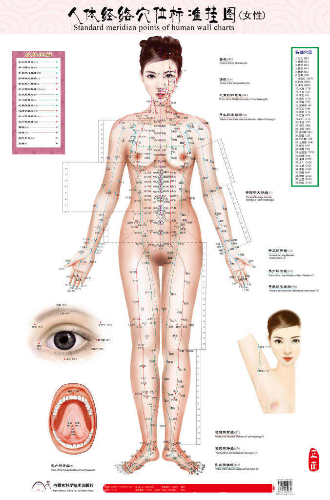 standard meridian points of human wall chart female / male acupuncture massage point map flipchart HD 3 chinese - English women