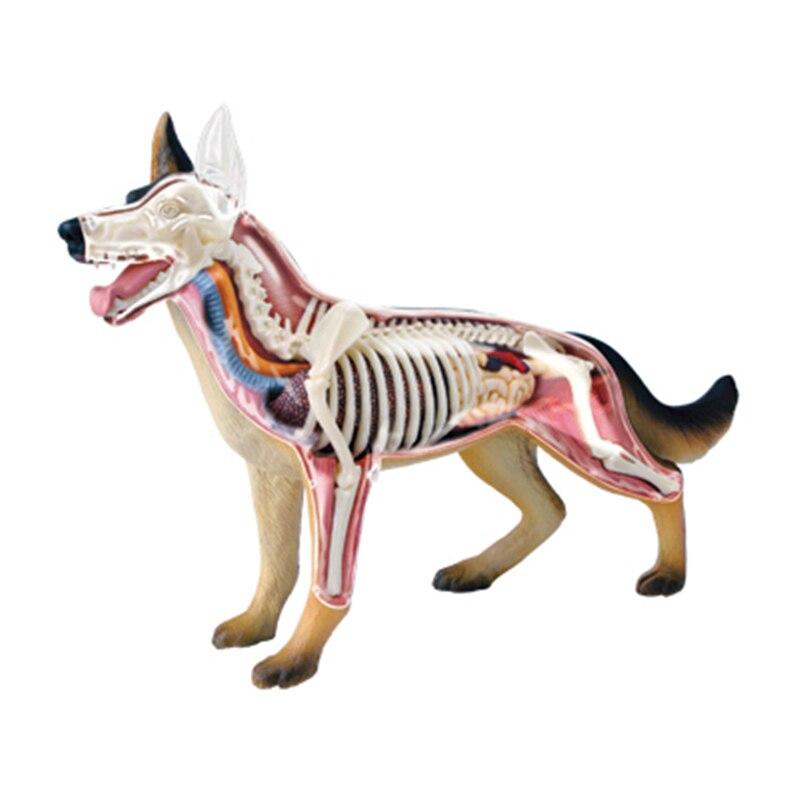 4D Cão brinquedos de Inteligência Montagem Brinquedo Animal Órgão Anatomia Humana Modelo de Ensino Médico DIY Aparelhos de Ciência Popular